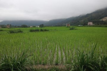 National Paddy Day in Nepal