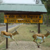 Banke National Park