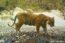 Banke National Park