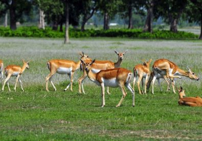 Shuklaphanta National Park