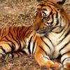 Parsa Wildlife Reserve
