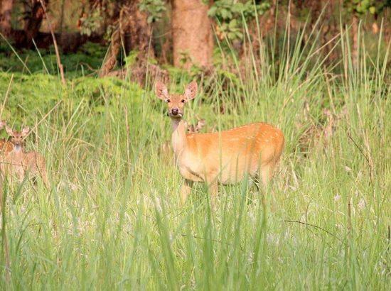 Shuklaphanta National Park
