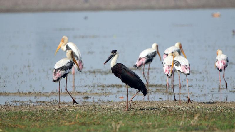 Bird watching in Bardiya National Park