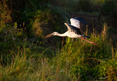 Bird Watching at Chitwan National Park