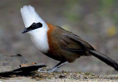 Bird Watching at Shivapuri
