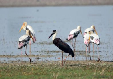 Bird Watching at Bardia National Park
