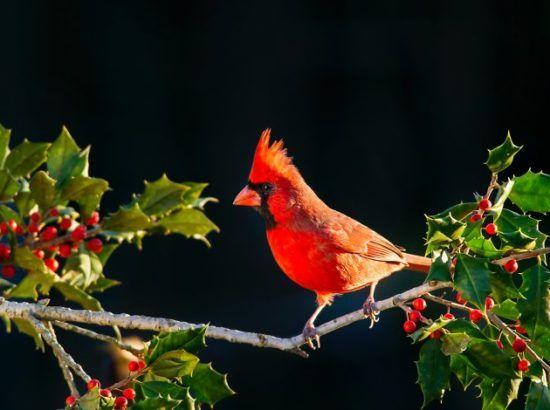 Bird Watching at Godavari