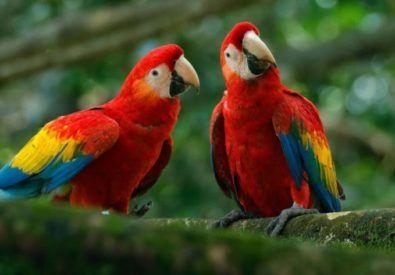 Bird Watching at Koshi Tappu Wildlife Reserve