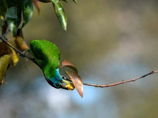 Bird Watching at Nagarjun