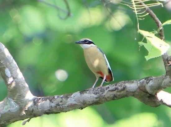 Bird Watching at Phulchowki