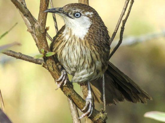 Bird Watching In Shivapuri