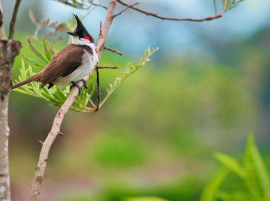 Bird Watching at Shuklapanta National Park