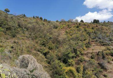 Shivapuri Wildlife Discovery Tour