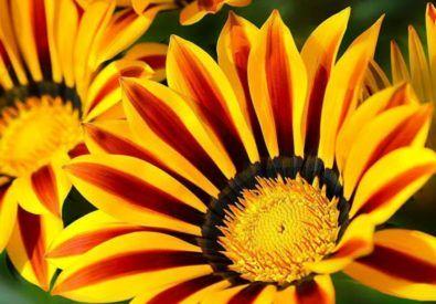New Sunflower Nursery