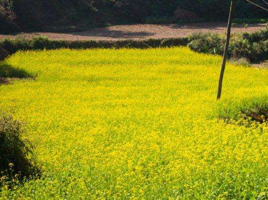 Chisapani Nagarkot Popular Trek – 3 Days